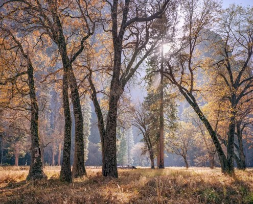 Meadow and Sun, Autumn, Yosemite by Charles Cramer