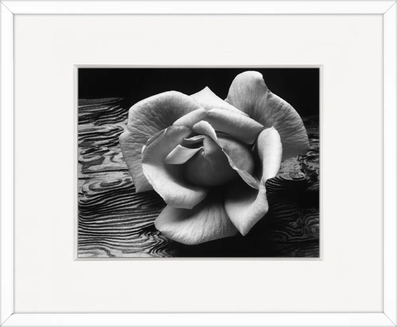Rose and Driftwood Framed in White Wood