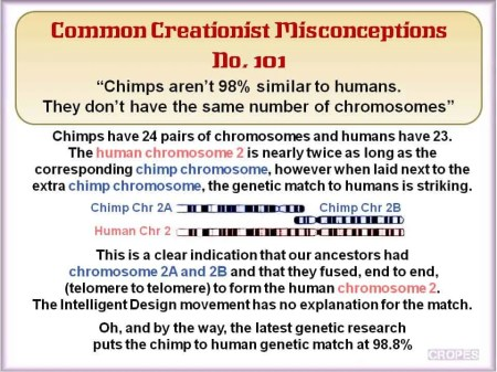 Chimps and Chromosome Pairs