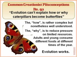 Creationist Misconceptions No. 92 - Butterflies How & Why