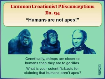 Humans are not apes!