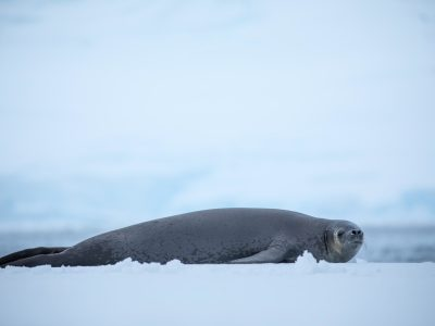 Image of Photography in Antarctica, what to know.