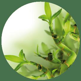 Bamboe en Aloë Vera