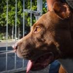 Reportan envenenamientos de mascotas en Zapopan
