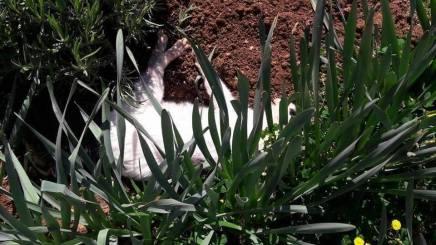 Arbanasi - ubojstvo macke (1)