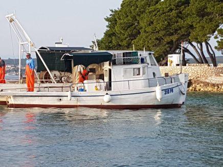 Ribari petrcane (4)