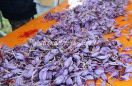 Festa dello zafferano a Dardago