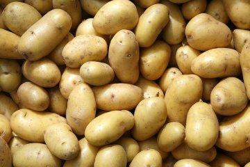 Sagra delle Patate a Godia