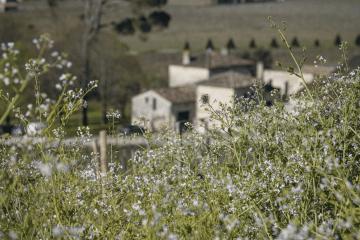 larcis_ducasse