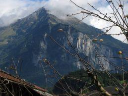 An apple tree set against one of Meiringen's mountain guardians.