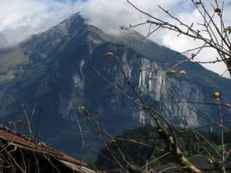 An apple tree set against one of Meiringen's mountain guardians.