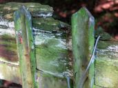 An old fence; its posts rusting