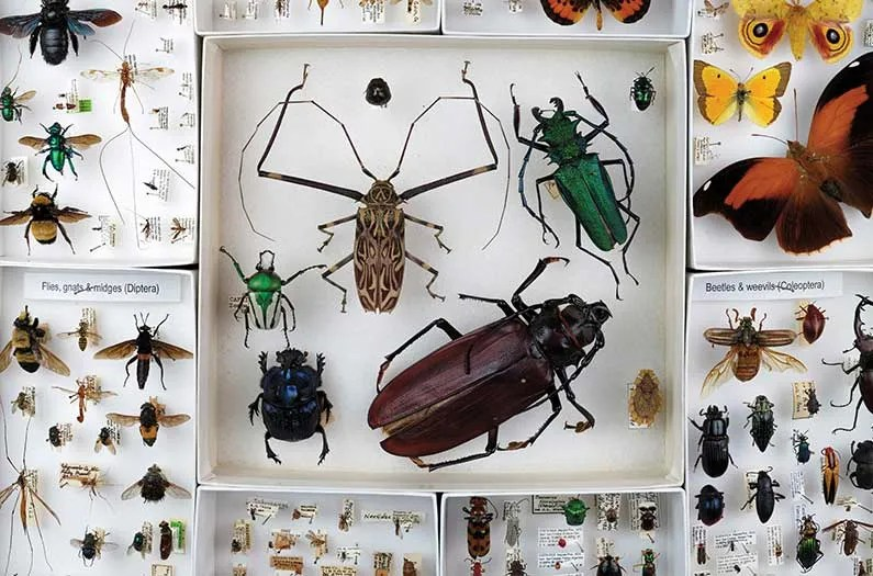 Insects, imperfect knowledge, and the imperative of action