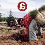 La silvicultura, mirando al pasado para salvar el futuro