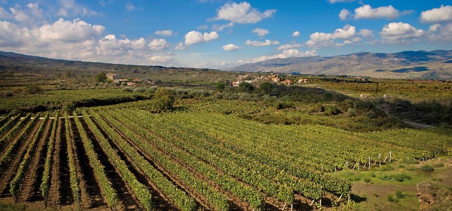 Territorio, vino e turismo esperienziale