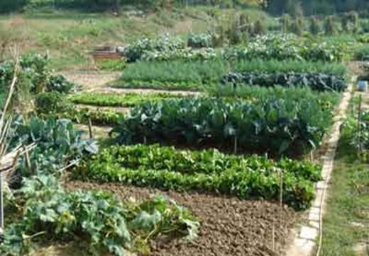 az_agricola_5