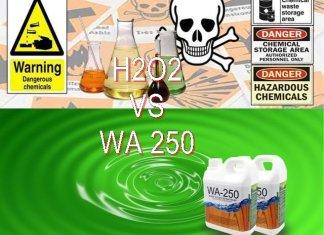 Inilah Beda Cara Memutihkan Bambu Dengan H2O2 Dan WA 250