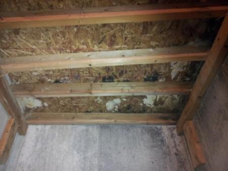 obat ajmur di plywood