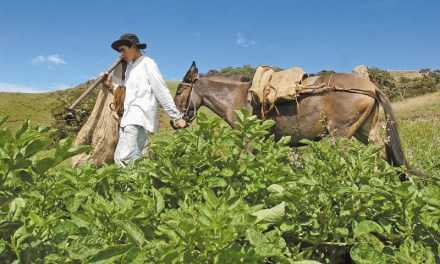 Arriería: retrato de una cultura olvidada en Girardota