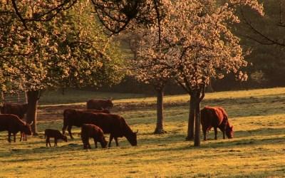 Curso en Sistemas Agroforestales en Cáceres