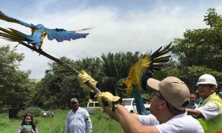 En La Ceja se protege a los animales silvestres