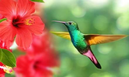 La Ceja comprometida con la biodiversidad