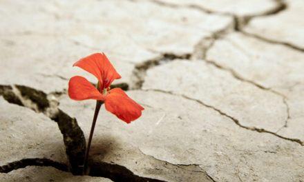Pedagogías sobre resiliencia en Tarso