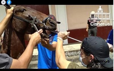 Cisneros celebró el día del caballo