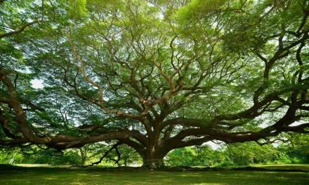 100 nuevos árboles en San Jerónimo