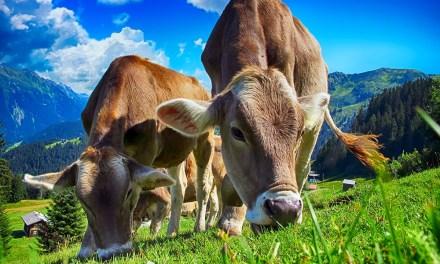 Antioquia busca estrategias para tener una ganadería en pro del medio ambiente