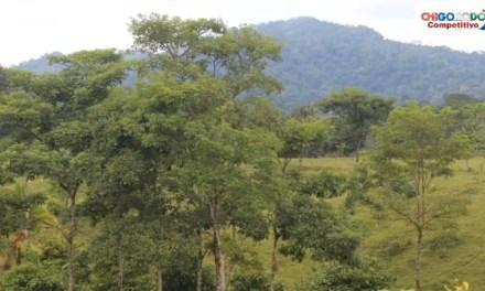 Chigorodó protege las fuentes hídricas