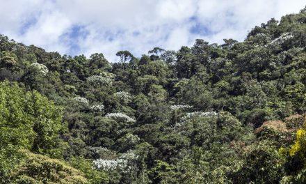 Cañasgordas conmemora a los bosques
