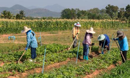 La asociatividad es la clave para que Antioquia progrese en la agricultura