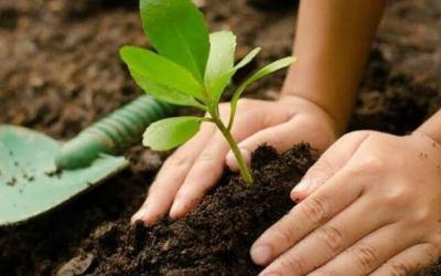 Titiribí protege el ecosistema con 2.000 árboles