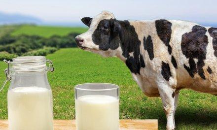 En el departamento se está buscando estrategias para evitar pérdidas de más de 2 millones de litros de leche