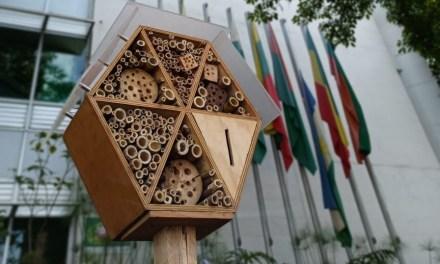 Sede del Área Metropolitana será refugio para abejas solitarias