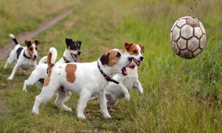 Tenencia responsable de mascotas en Sabanalarga