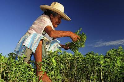 Nuevo proyecto en Antioquia para pequeños productores agrícolas