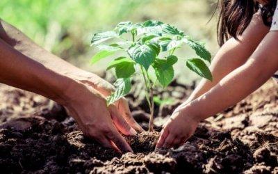 88.800 árboles se sembraron en Cisneros