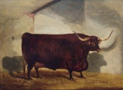 John Vine's Bull in a Stable