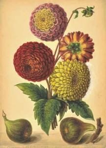 Newly discovered botanical watercolours at LAPADA