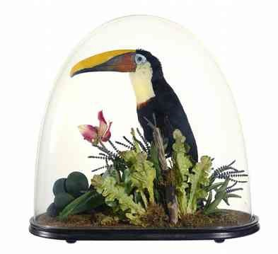 Taxidermy toucan