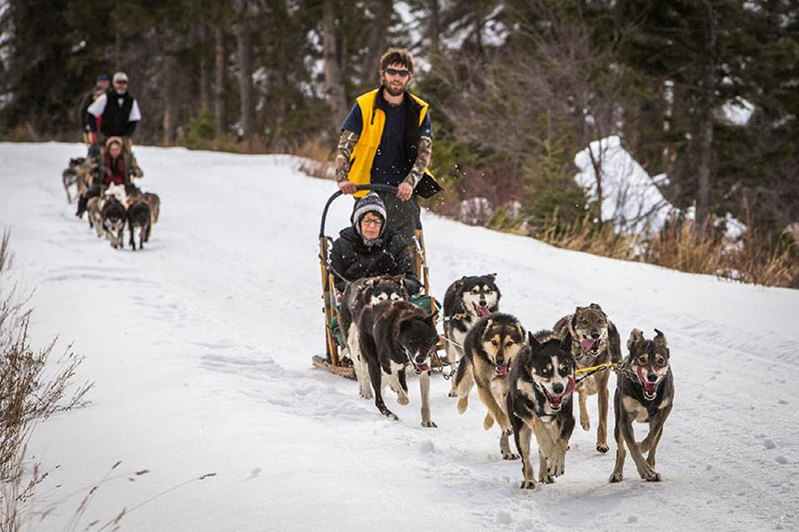 bozeman dogsledding