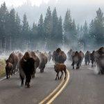 Weekend Escape: Bozeman, Montana