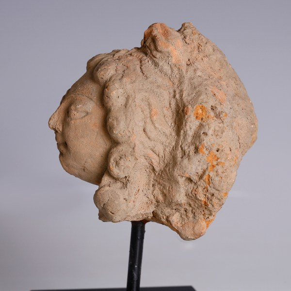 Gandharan Head of Bodhisattva