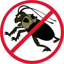 Tips Memilih Anti Serangga yang Bagus – BioCide Insecticide