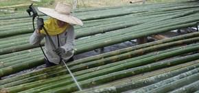 Alasan Buruknya Pengawetan Bambu dengan Solar