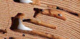 kerusakan-kayu-akibat-rayap