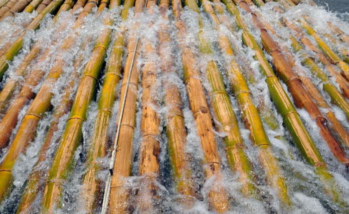 Pengawetan Bambu Cara Tradisional