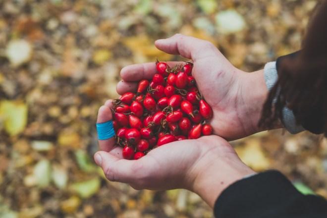 stockholm_rosehip_autumn-56